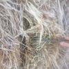 Hay pasture/cereal 8x4x3 Bales