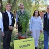Two new Milling Oat varieties to consider - Durack and Kowari