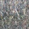 Forage sorghum hay