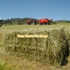 Ryegrass / canola hay