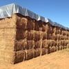 Vetch Hay 8x4x3 -800 x 550 KG Approx Bales   Good Feed Test