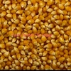 Pop Corn ( Butterfly Variety ) x 500 M/T