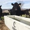 8ft concrete cattle troughs 620Litres