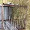Under Auction (A129) - Calf Crate 5 Ft 6 inches x 4 Ft - 2% + GST Buyers Premium On All Lots