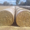 Oaten Hay Rolls, P. 4.3%, ME. 9. Good Quality, colour and smell.