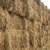 Oaten Hay 800 x 650kg Approx 8x4x3 Bales ex farm