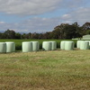 Lucerne Silage 4ft rounds 3rd Cut Garfield vic