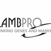 Huge Sale - Lambpro Ram Sale Result