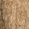 New Season Barley Straw 8x3x3