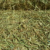 Barley/Vetch 8x4x3