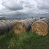 Hay rolls pasture