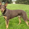 2 x Red Kelpies missing Elmore
