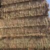 New season vetch hay