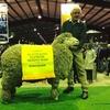 Rock-Bank Merino Rams sell to $9000