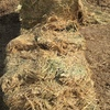 Oaten Hay For Sale in 8x4x3's -  Feed Tested