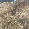 Sheded Clover Hay rolls