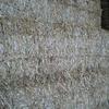 Pure balansa clover hay