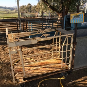 Sheep Weigh Crate and Indicator