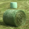 Rye Grass Silage 4x4 -250 x 500 KG Approx Bales