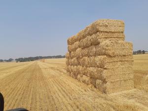 Straw barley header trailings