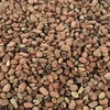 Feed Beans ( Faba ) x 42 m/t + Freight