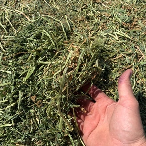 Vetch hay located Wakool NSW (Riverina)