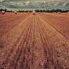 Unravelling the boom-bust nature of Fodder in drought