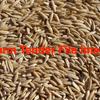 Nile oats