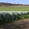 MAKE ME AN OFFER - 370 Silage Rolls, Including, Lucerne, Oats, Chichory and Forage Sorghum.