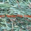 WANTED Cereal Hay in 8x4x3 Bales, New season Oaten or Barley, Must be in Northern NSW or  QLD