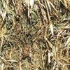 Vetch Hay for sale