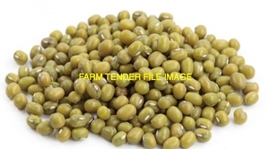 Green Mung Beans Wanted for Export