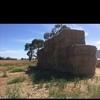 Ryegrass hay