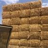 Barley Straw 550kg Bales