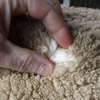 Wool Market takes another hit