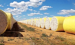 Opportunities in the fast growing Cotton industry
