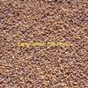 White Clover Seed  - Grain & Seed