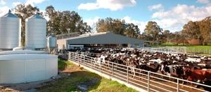 Australian Farmer confidence declines - Rabobank