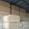 Wheaten Hay 8x4x3 500 m/t x 625 KG Approx Bales & Shedded, Great Quality
