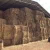 Clover Ryegrass Hay in 8x4x3 big squares