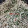 Clover Hay For Sale in 8x4x3's x 270 Bales
