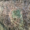 60 Bales of Vetch Hay Shedded