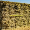 Awnless Wheaten Hay small squares in bale baron packs (21 Bales)