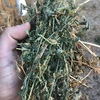Good irrigated Lucerne for sale in 8x4x3's
