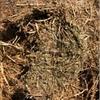 Vetch Hay 8x4x3 - 300 x 600 KG Approx Bales