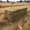 Under Auction - Ryegrass / Clover 3 x 3 x 8 squares