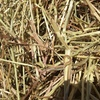 Pasture Hay For Sale in 8x4x3's