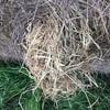 Italian Rye Grass Hay 5x4 Rolls