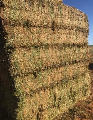 300mt Vetch Hay 650kg 8x4x3 Bales ex Paddock (NEW SEASON)