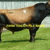 Wanted 15 Working Age Jersey Bulls